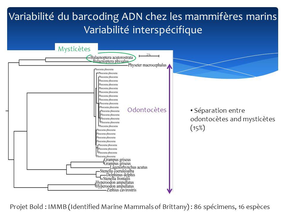Séparation entre odontocètes and mysticètes (15%) Mysticètes Odontocètes Variabilité du barcoding ADN chez les mammifères marins Variabilité interspéc