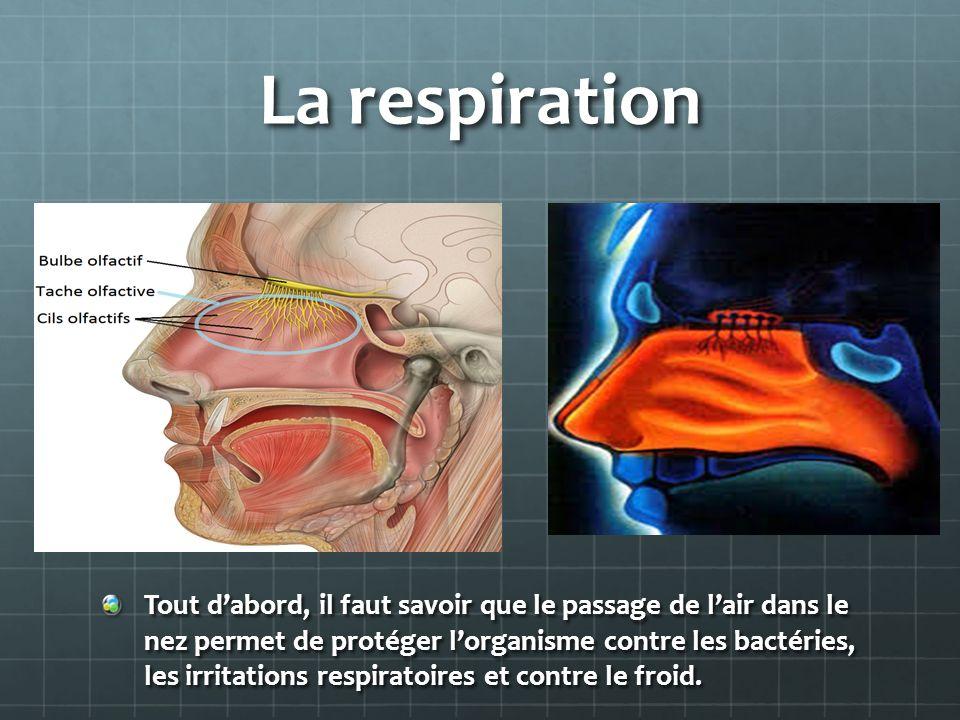 La respiration Tout dabord, il faut savoir que le passage de lair dans le nez permet de protéger lorganisme contre les bactéries, les irritations respiratoires et contre le froid.