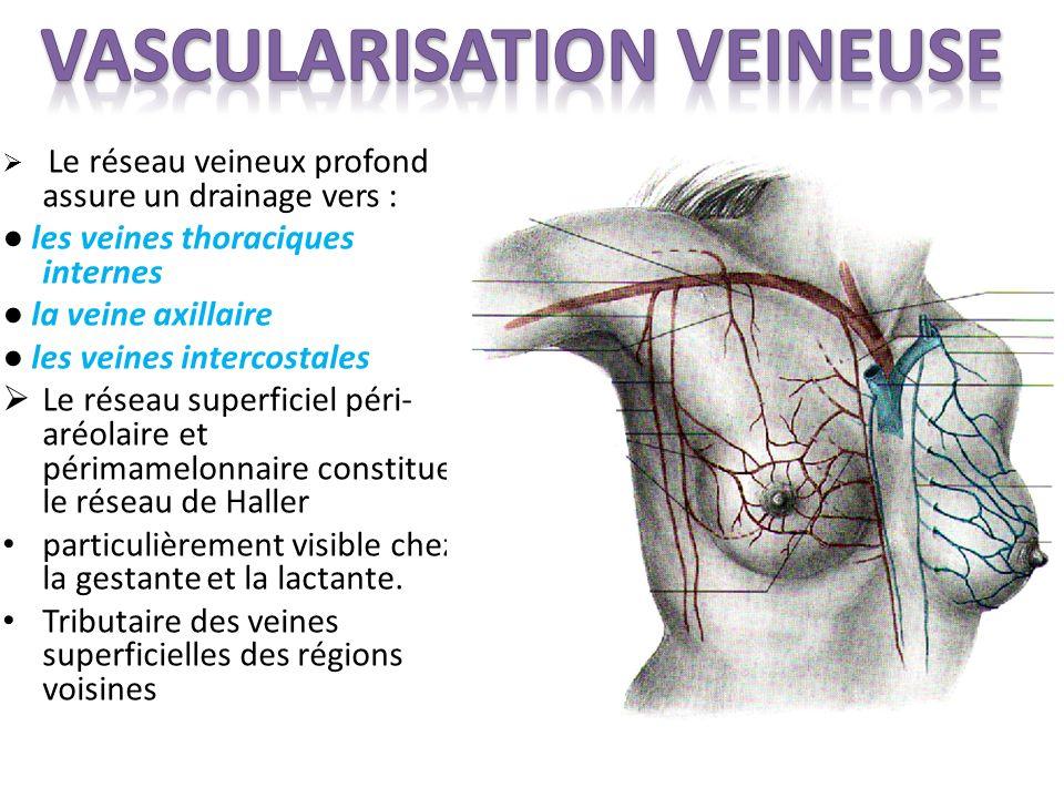 Le réseau veineux profond assure un drainage vers : les veines thoraciques internes la veine axillaire les veines intercostales Le réseau superficiel péri- aréolaire et périmamelonnaire constitue le réseau de Haller particulièrement visible chez la gestante et la lactante.