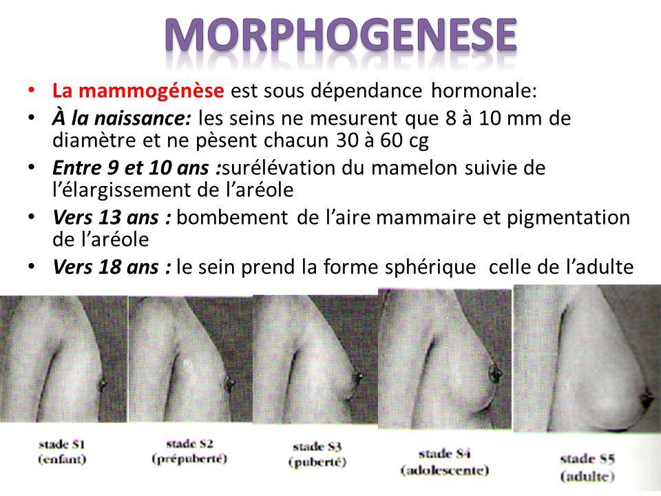 La mammogénèse est sous dépendance hormonale: À la naissance: les seins ne mesurent que 8 à 10 mm de diamètre et ne pèsent chacun 30 à 60 cg Entre 9 et 10 ans :surélévation du mamelon suivie de lélargissement de laréole Vers 13 ans : bombement de laire mammaire et pigmentation de laréole Vers 18 ans : le sein prend la forme sphérique celle de ladulte