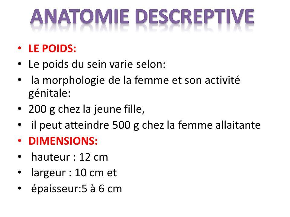 LE POIDS: Le poids du sein varie selon: la morphologie de la femme et son activité génitale: 200 g chez la jeune fille, il peut atteindre 500 g chez l