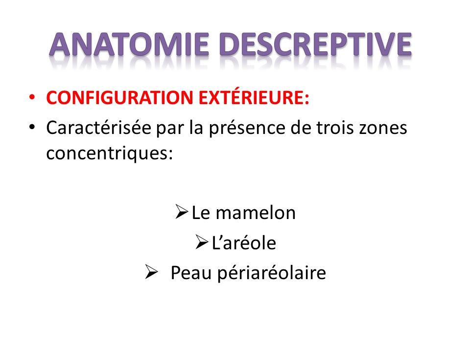 CONFIGURATION EXTÉRIEURE: Caractérisée par la présence de trois zones concentriques: Le mamelon Laréole Peau périaréolaire