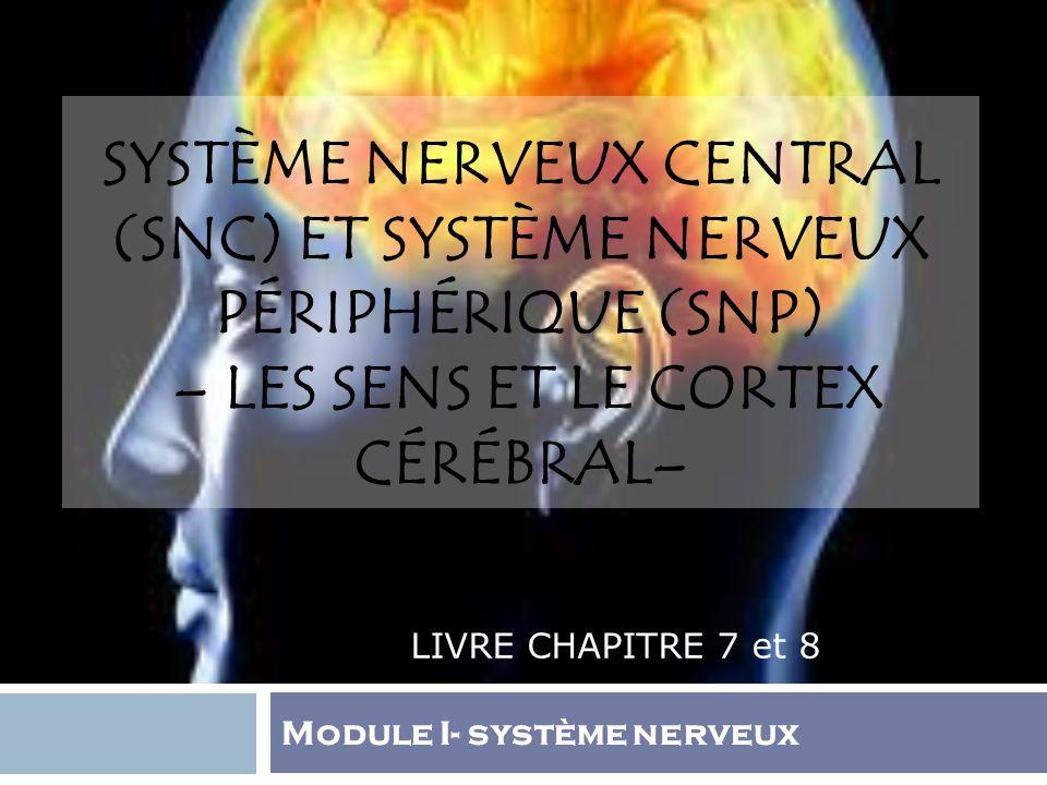 SYSTÈME NERVEUX CENTRAL (SNC) ET SYSTÈME NERVEUX PÉRIPHÉRIQUE (SNP) – LES SENS ET LE CORTEX CÉRÉBRAL– LIVRE CHAPITRE 7 et 8 Module I- système nerveux