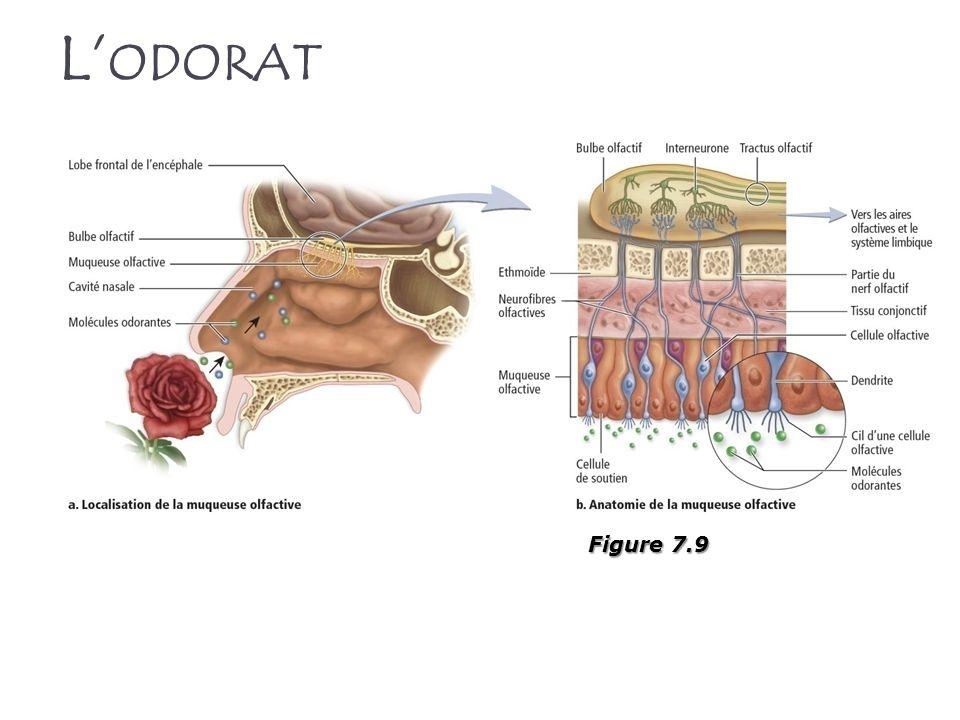 L ODORAT Figure 7.9