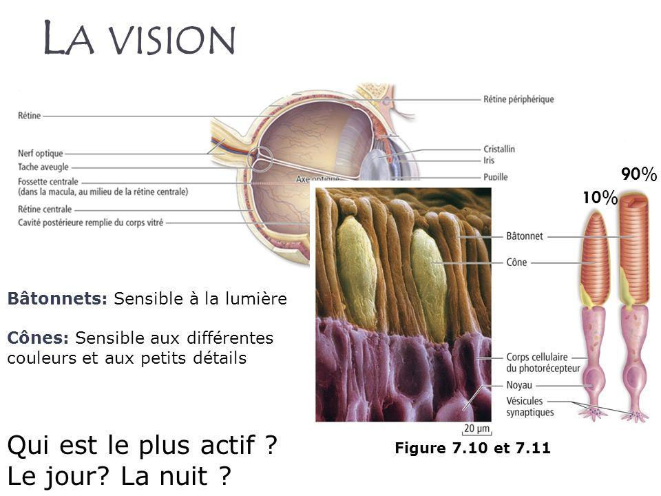 Figure 7.10 et 7.11 L A VISION Bâtonnets: Sensible à la lumière Cônes: Sensible aux différentes couleurs et aux petits détails 90% 10% Qui est le plus