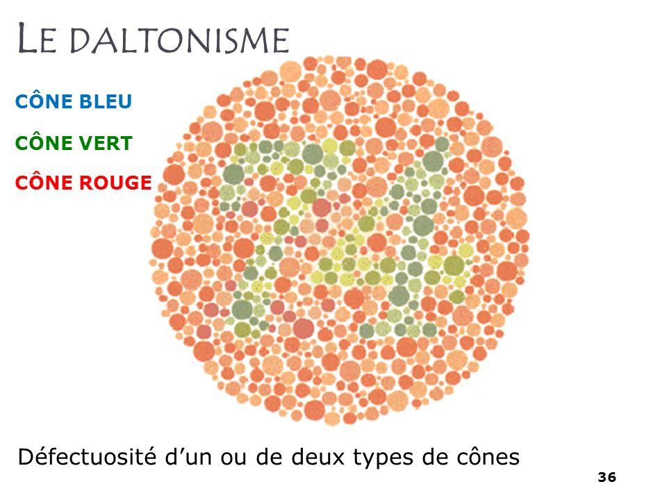 36 L E DALTONISME Défectuosité dun ou de deux types de cônes CÔNE BLEU CÔNE VERT CÔNE ROUGE