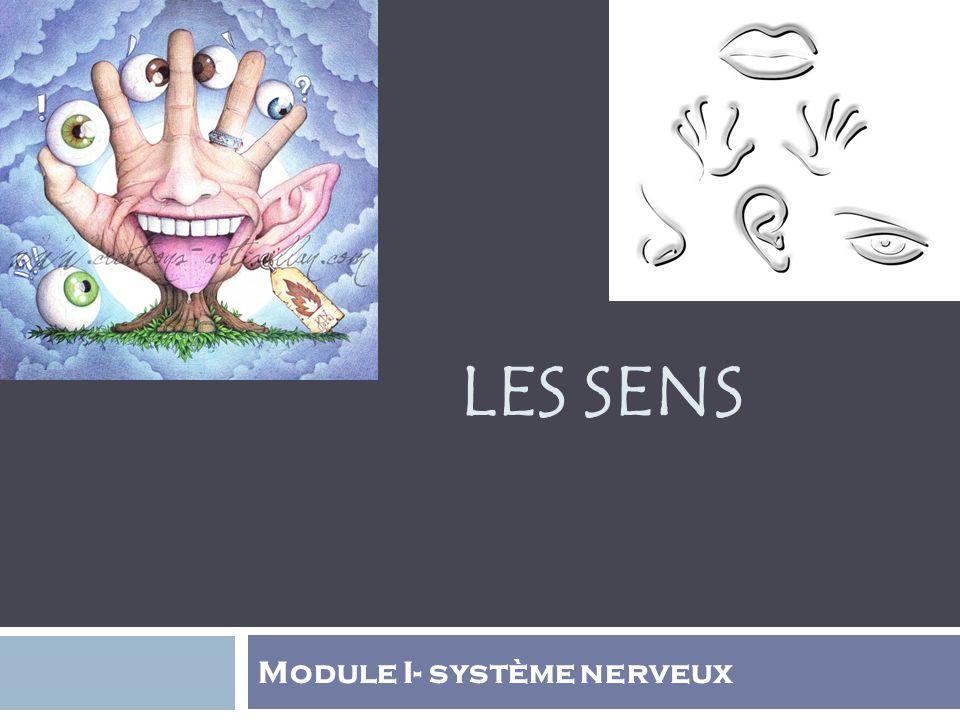 LES SENS Module I- système nerveux