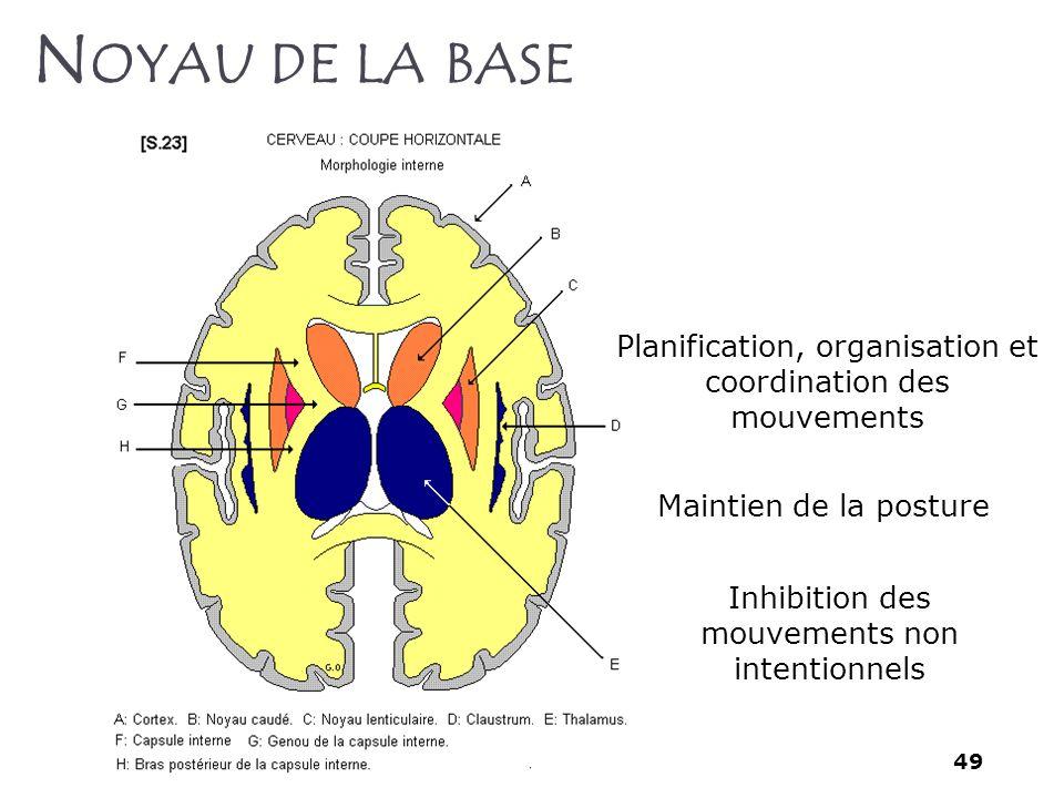 49 N OYAU DE LA BASE Planification, organisation et coordination des mouvements Maintien de la posture Inhibition des mouvements non intentionnels