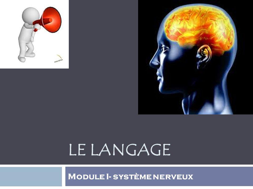LE LANGAGE Module I- système nerveux