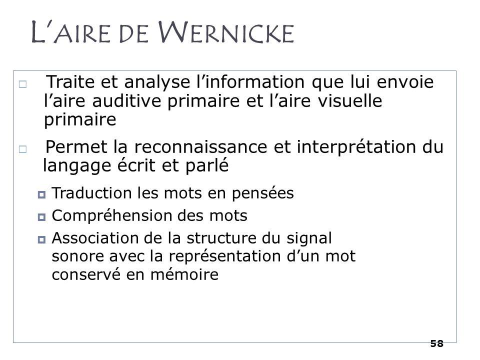 58 L AIRE DE W ERNICKE Traite et analyse linformation que lui envoie laire auditive primaire et laire visuelle primaire Permet la reconnaissance et in