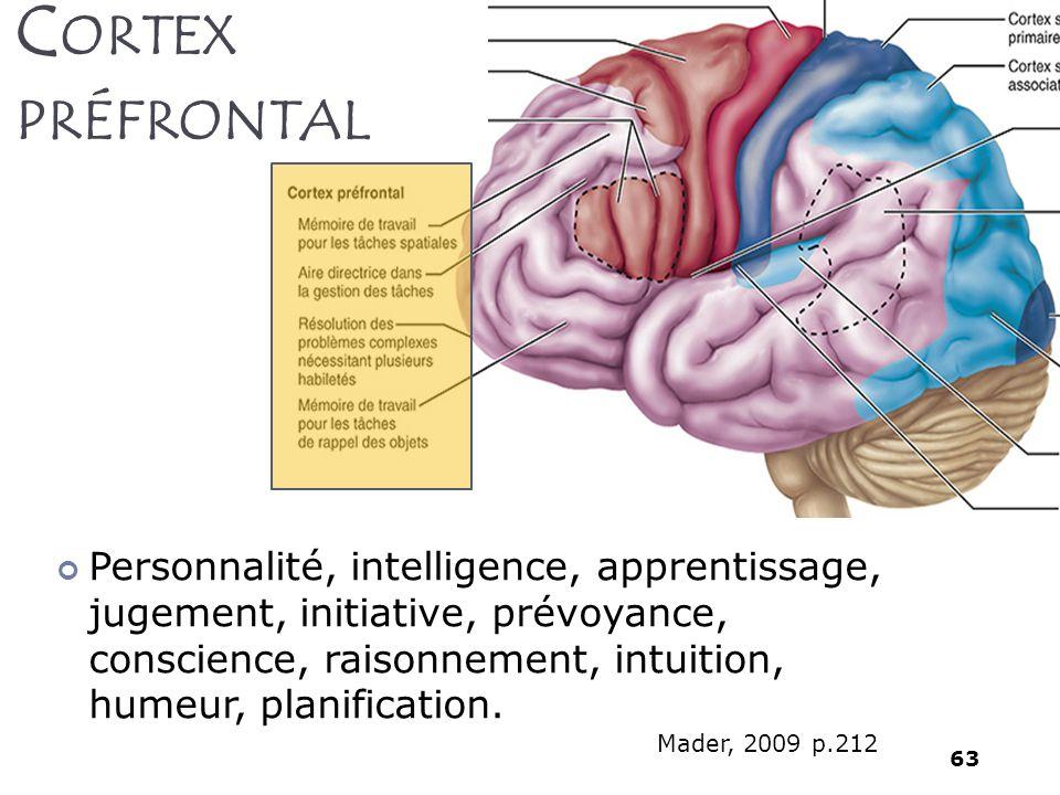 63 Personnalité, intelligence, apprentissage, jugement, initiative, prévoyance, conscience, raisonnement, intuition, humeur, planification. C ORTEX PR
