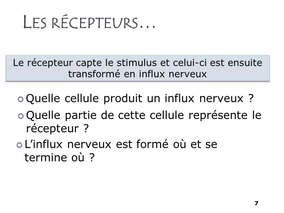 7 L ES RÉCEPTEURS … Quelle cellule produit un influx nerveux ? Linflux nerveux est formé où et se termine où ? Quelle partie de cette cellule représen