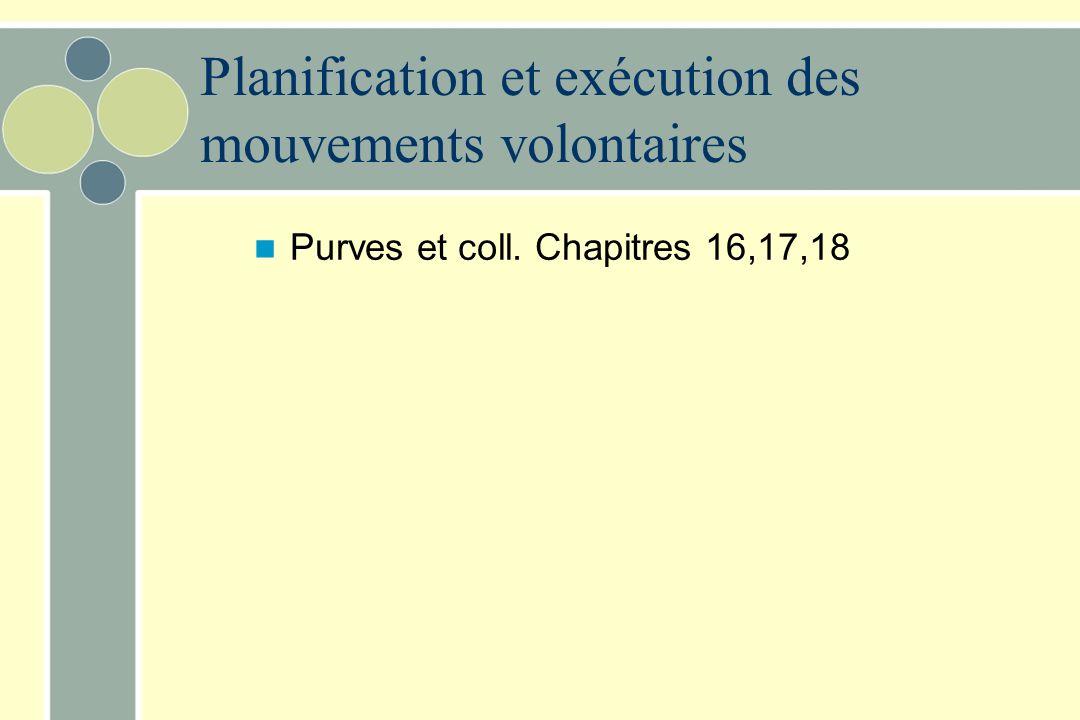 Planification et exécution des mouvements volontaires Purves et coll. Chapitres 16,17,18
