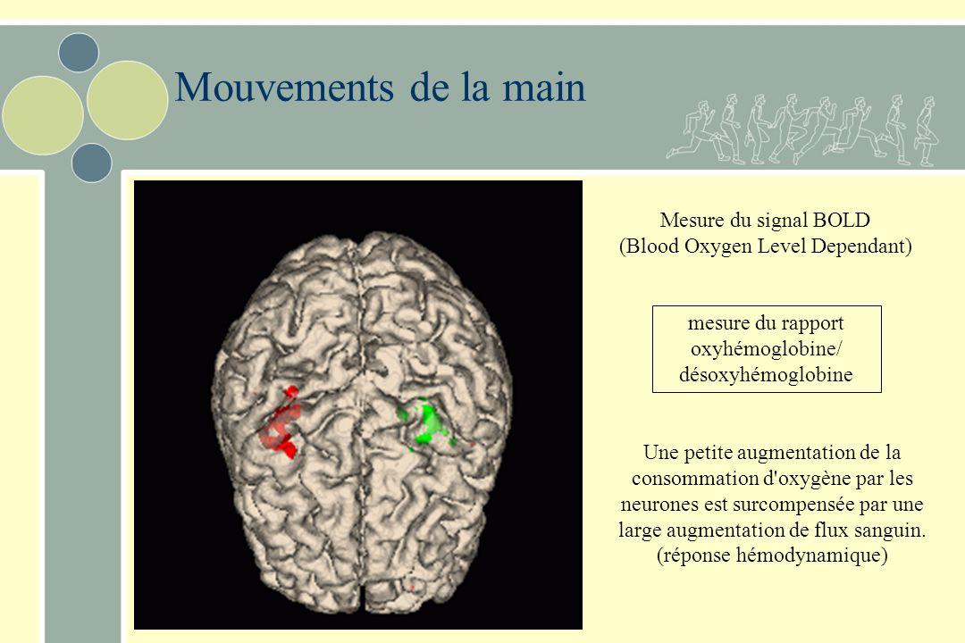 Mouvements de la main mesure du rapport oxyhémoglobine/ désoxyhémoglobine Mesure du signal BOLD (Blood Oxygen Level Dependant) Une petite augmentation de la consommation d oxygène par les neurones est surcompensée par une large augmentation de flux sanguin.