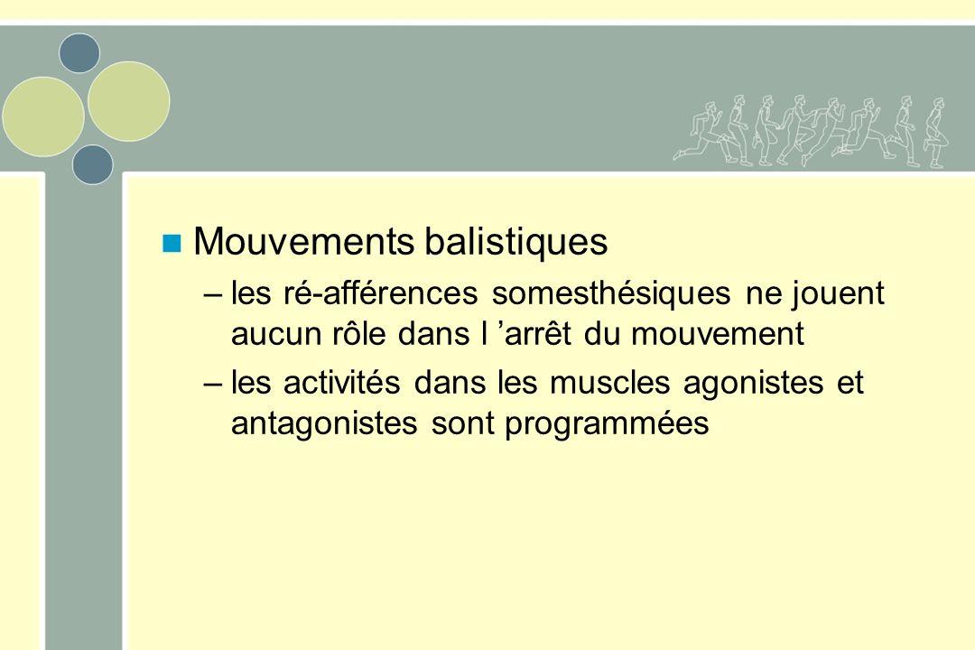 Mouvements balistiques –les ré-afférences somesthésiques ne jouent aucun rôle dans l arrêt du mouvement –les activités dans les muscles agonistes et a