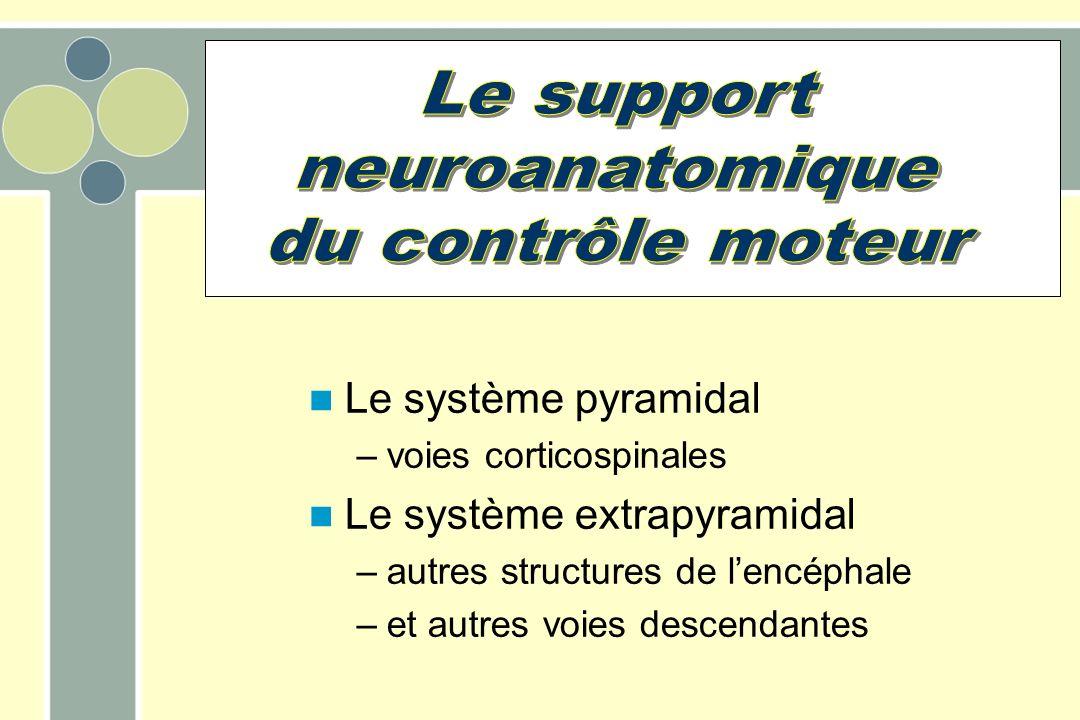 Le système pyramidal –voies corticospinales Le système extrapyramidal –autres structures de lencéphale –et autres voies descendantes