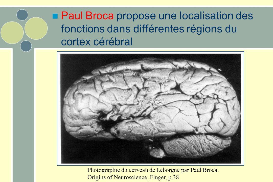 Photographie du cerveau de Leborgne par Paul Broca. Origins of Neuroscience, Finger, p.38 Paul Broca propose une localisation des fonctions dans diffé