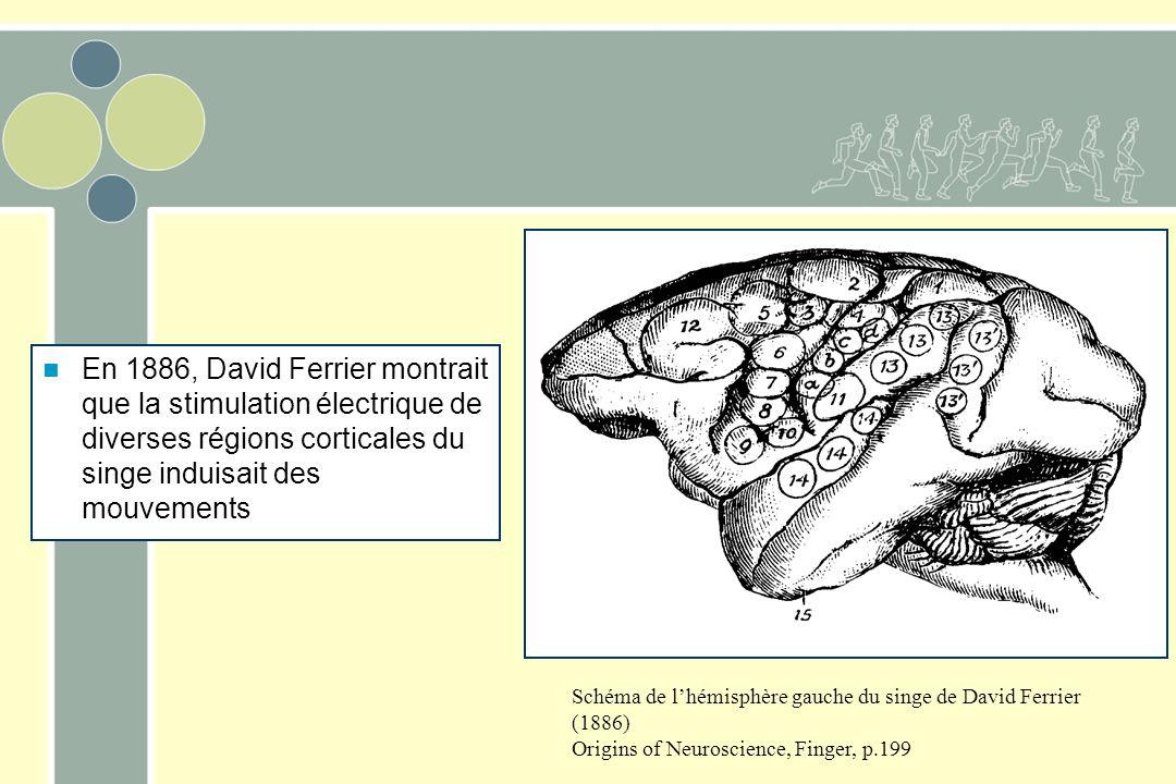 Schéma de lhémisphère gauche du singe de David Ferrier (1886) Origins of Neuroscience, Finger, p.199 En 1886, David Ferrier montrait que la stimulation électrique de diverses régions corticales du singe induisait des mouvements