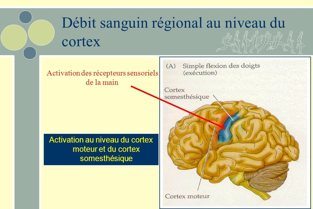 Débit sanguin régional au niveau du cortex Activation au niveau du cortex moteur et du cortex somesthésique Activation des récepteurs sensoriels de la main