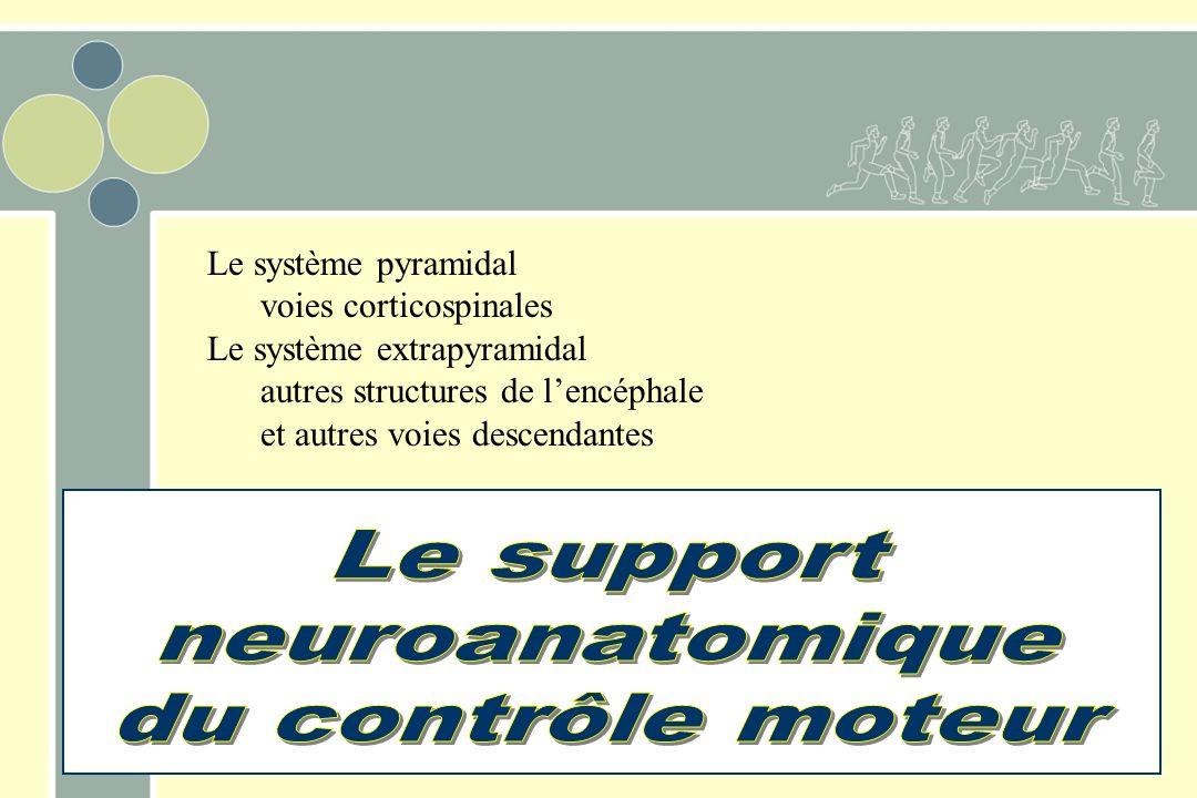 Le système pyramidal voies corticospinales Le système extrapyramidal autres structures de lencéphale et autres voies descendantes