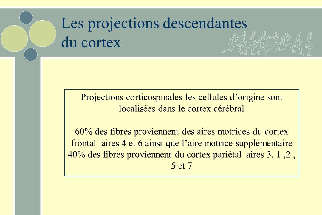 Les projections descendantes du cortex Projections corticospinales les cellules dorigine sont localisées dans le cortex cérébral 60% des fibres proviennent des aires motrices du cortex frontal aires 4 et 6 ainsi que laire motrice supplémentaire 40% des fibres proviennent du cortex pariétal aires 3, 1,2, 5 et 7