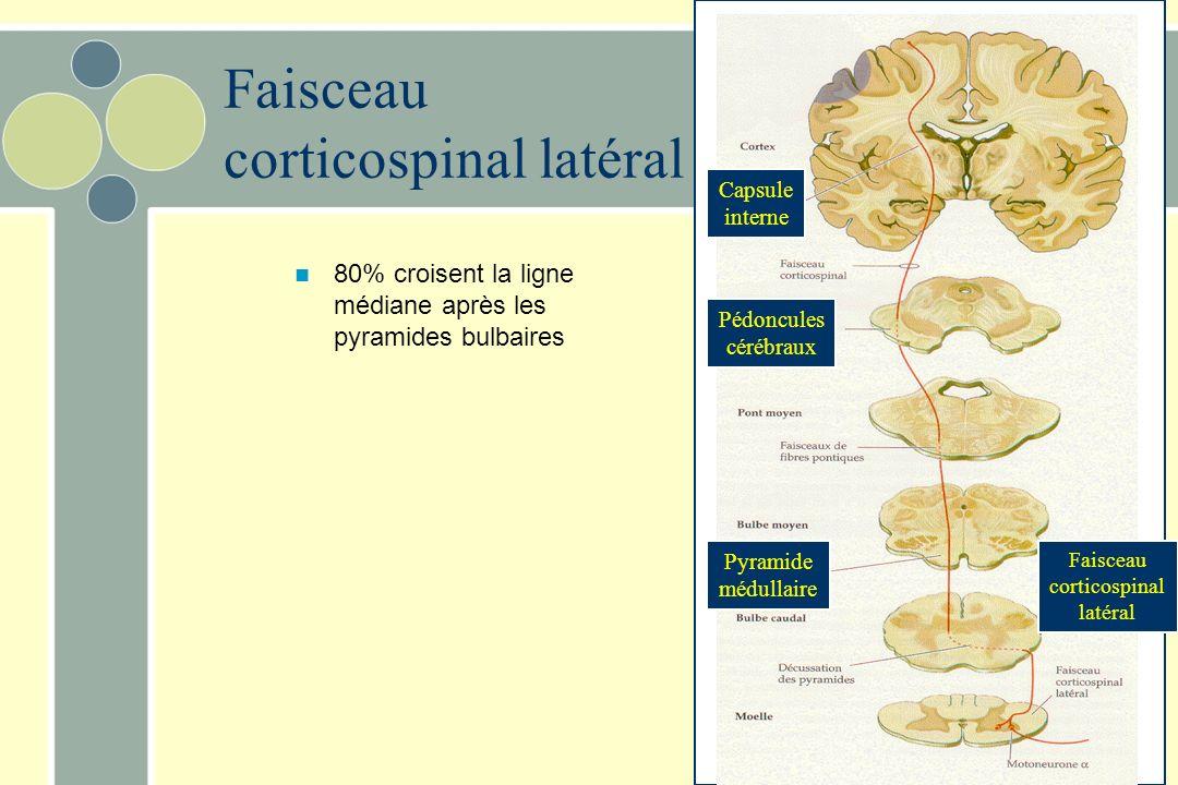Pédoncules cérébraux Pyramide médullaire Faisceau corticospinal latéral Faisceau corticospinal latéral 80% croisent la ligne médiane après les pyramides bulbaires Capsule interne