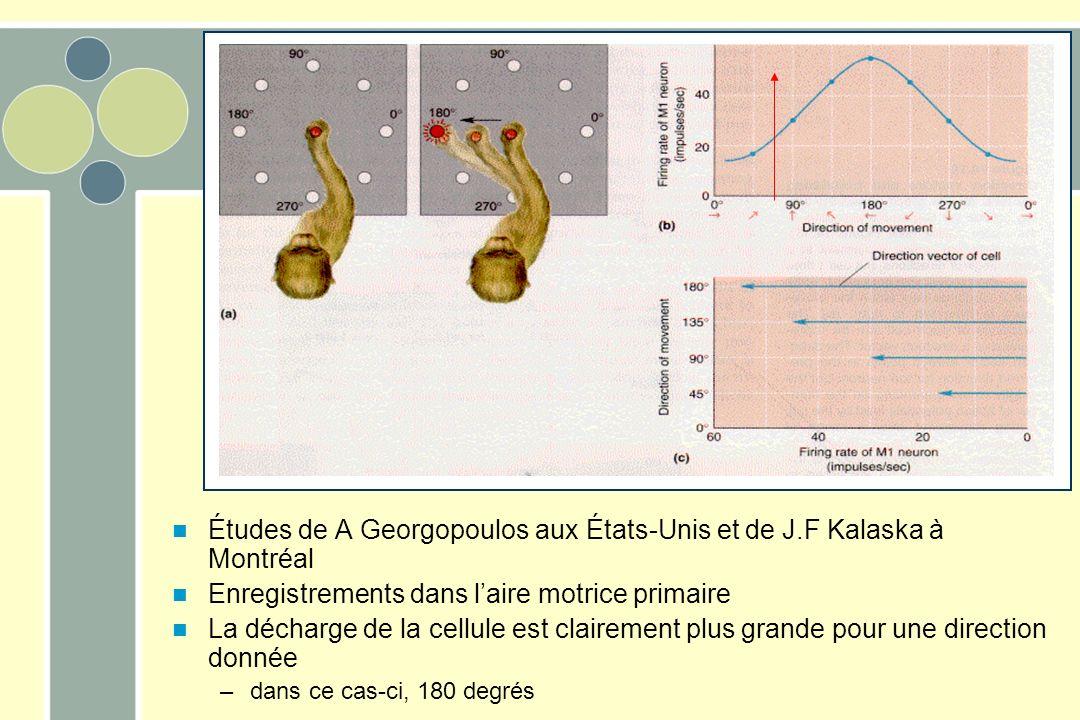 Études de A Georgopoulos aux États-Unis et de J.F Kalaska à Montréal Enregistrements dans laire motrice primaire La décharge de la cellule est clairement plus grande pour une direction donnée –dans ce cas-ci, 180 degrés