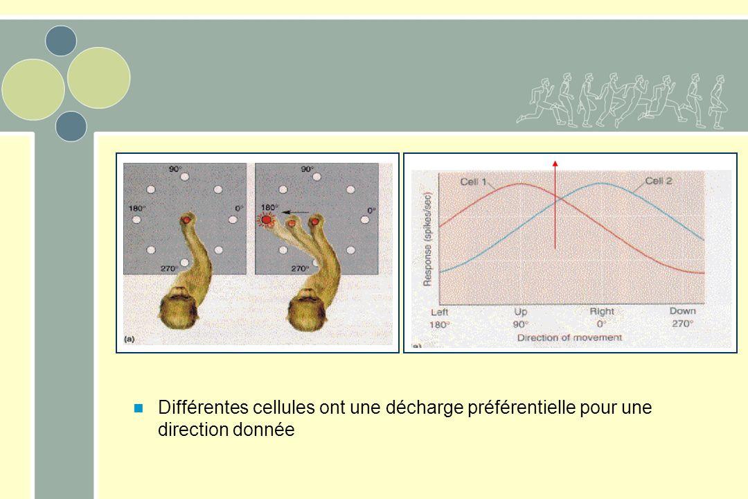 Différentes cellules ont une décharge préférentielle pour une direction donnée