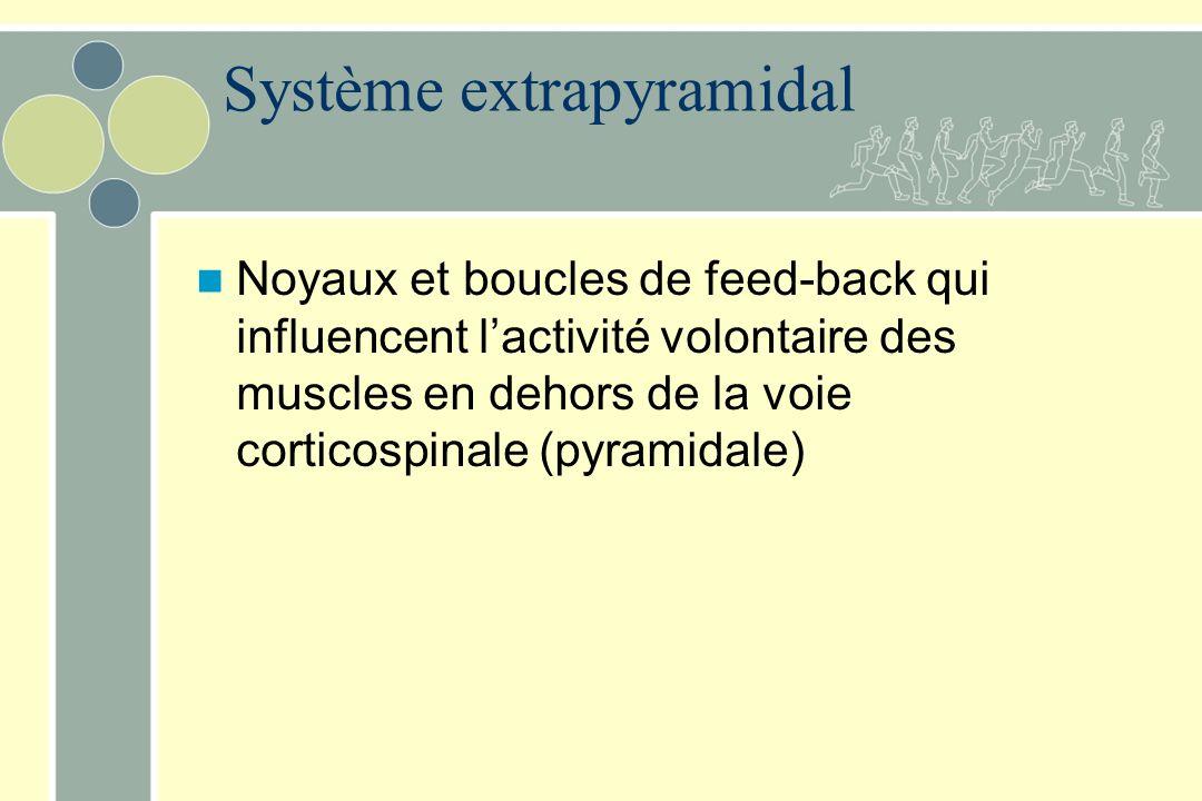 Système extrapyramidal Noyaux et boucles de feed-back qui influencent lactivité volontaire des muscles en dehors de la voie corticospinale (pyramidale)