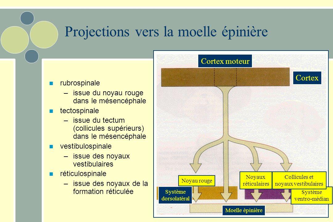 Cortex moteur Cortex Système dorsolatéral Noyau rouge Moelle épinière Noyaux réticulaires Système ventro-médian Collicules et noyaux vestibulaires Pro