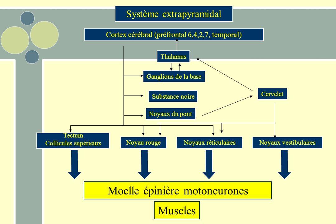 Moelle épinière motoneurones Muscles Tectum Collicules supérieurs Noyau rougeNoyaux réticulairesNoyaux vestibulaires Noyaux du pont Ganglions de la base Thalamus Substance noire Système extrapyramidal Cortex cérébral (préfrontal 6,4,2,7, temporal) Cervelet