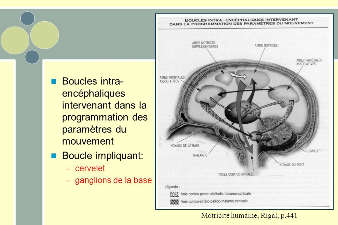 Motricité humaine, Rigal, p.441 Boucles intra- encéphaliques intervenant dans la programmation des paramètres du mouvement Boucle impliquant: –cervelet –ganglions de la base