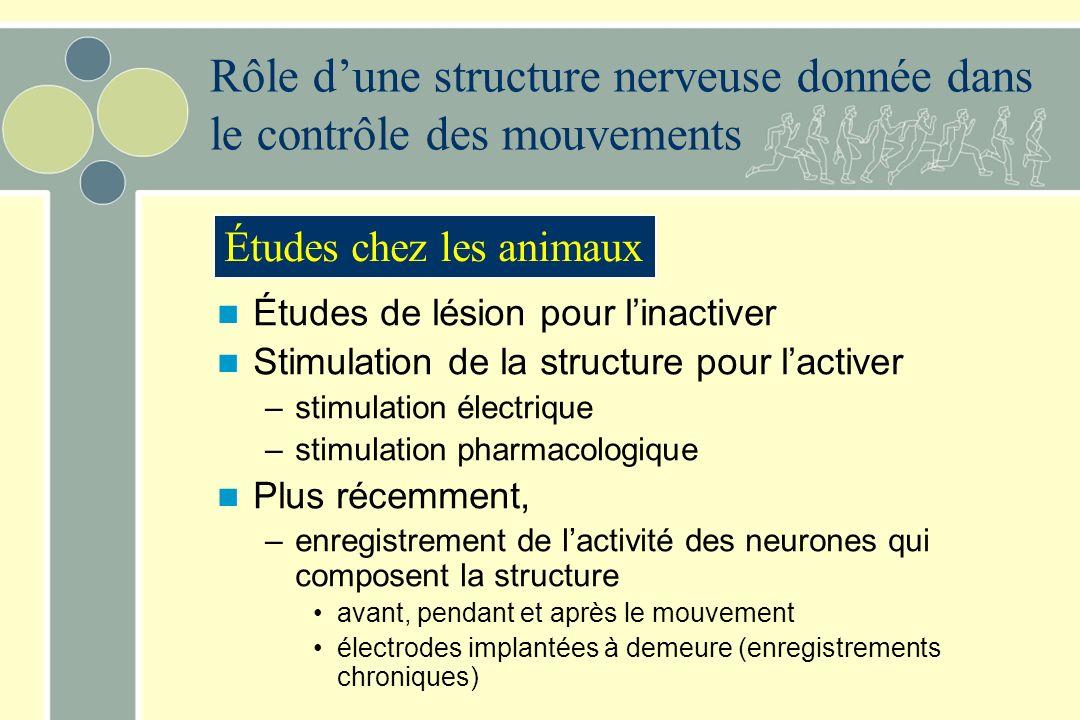 Études de lésion pour linactiver Stimulation de la structure pour lactiver –stimulation électrique –stimulation pharmacologique Plus récemment, –enreg