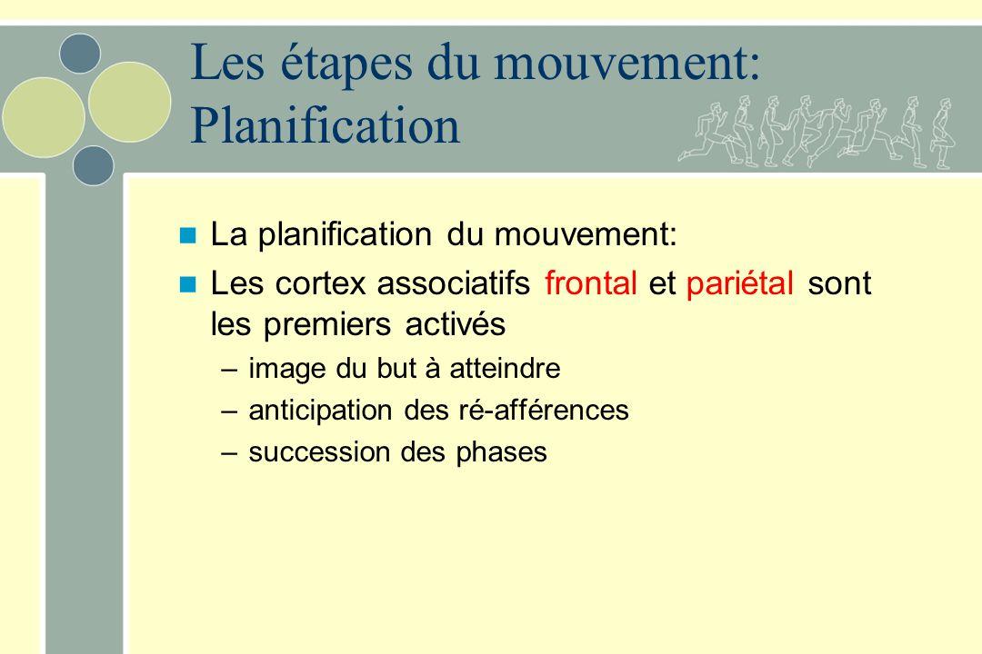 Les étapes du mouvement: Planification La planification du mouvement: Les cortex associatifs frontal et pariétal sont les premiers activés –image du but à atteindre –anticipation des ré-afférences –succession des phases