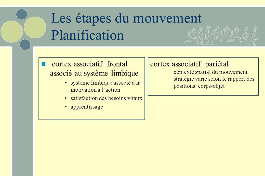 Les étapes du mouvement Planification cortex associatif frontal associé au système limbique système limbique associé à la motivation à laction satisfaction des besoins vitaux apprentissage cortex associatif pariétal contexte spatial du mouvement stratégie varie selon le rapport des positions corps-objet