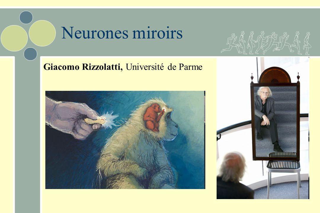Giacomo Rizzolatti, Université de Parme