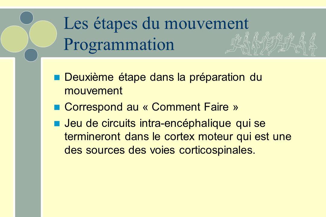 Les étapes du mouvement Programmation Deuxième étape dans la préparation du mouvement Correspond au « Comment Faire » Jeu de circuits intra-encéphalique qui se termineront dans le cortex moteur qui est une des sources des voies corticospinales.