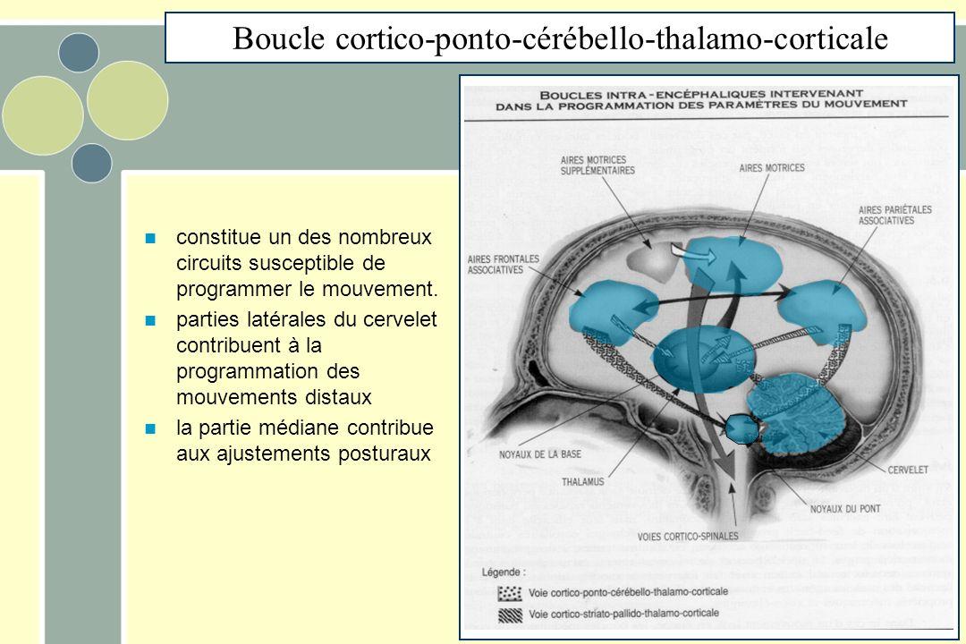 Boucle cortico-ponto-cérébello-thalamo-corticale constitue un des nombreux circuits susceptible de programmer le mouvement. parties latérales du cerve