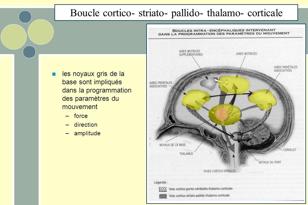 les noyaux gris de la base sont impliqués dans la programmation des paramètres du mouvement –force –direction –amplitude Boucle cortico- striato- pallido- thalamo- corticale