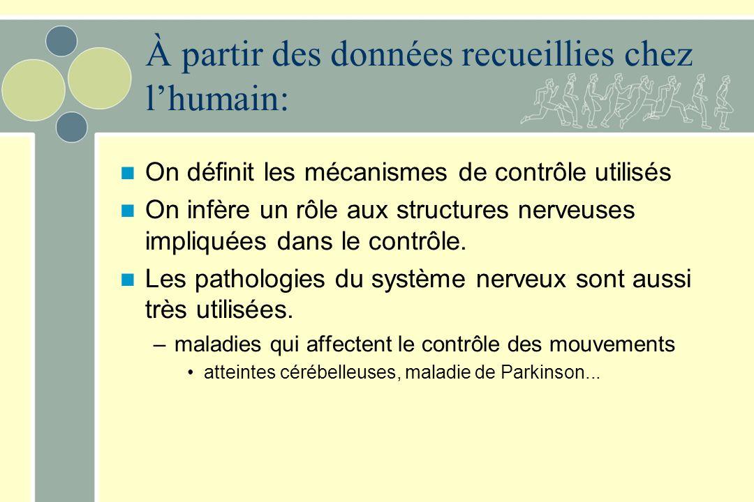 À partir des données recueillies chez lhumain: On définit les mécanismes de contrôle utilisés On infère un rôle aux structures nerveuses impliquées da