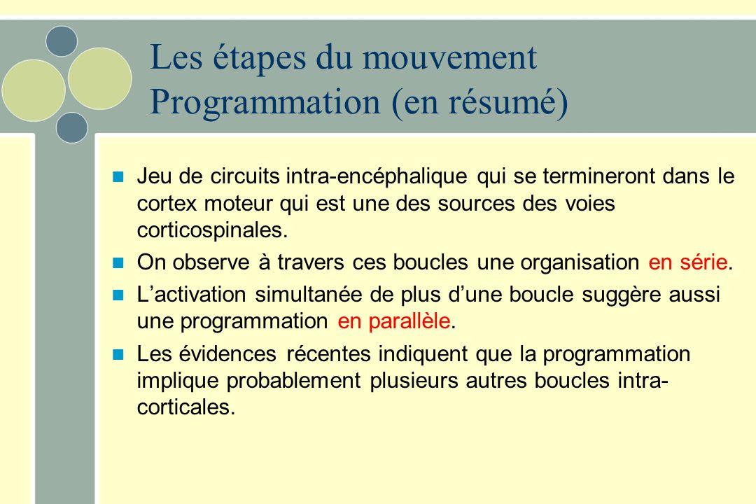 Les étapes du mouvement Programmation (en résumé) Jeu de circuits intra-encéphalique qui se termineront dans le cortex moteur qui est une des sources des voies corticospinales.