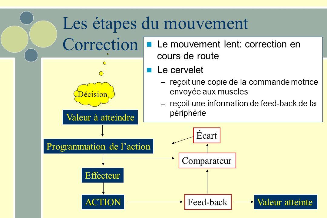 Le mouvement lent: correction en cours de route Le cervelet –reçoit une copie de la commande motrice envoyée aux muscles –reçoit une information de fe