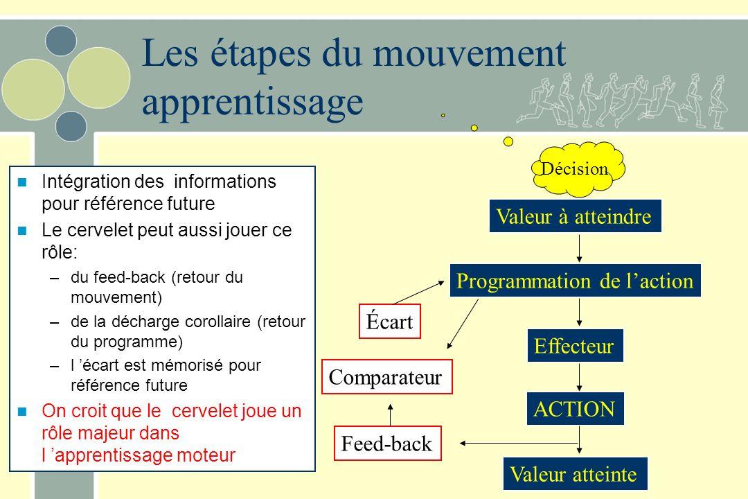 Les étapes du mouvement apprentissage Intégration des informations pour référence future Le cervelet peut aussi jouer ce rôle: –du feed-back (retour du mouvement) –de la décharge corollaire (retour du programme) –l écart est mémorisé pour référence future On croit que le cervelet joue un rôle majeur dans l apprentissage moteur Valeur à atteindre Programmation de laction Effecteur ACTION Valeur atteinte Décision Écart Comparateur Feed-back