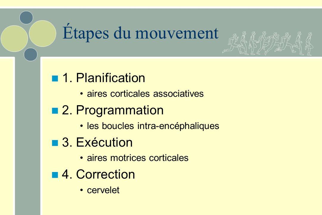 Étapes du mouvement 1. Planification aires corticales associatives 2. Programmation les boucles intra-encéphaliques 3. Exécution aires motrices cortic