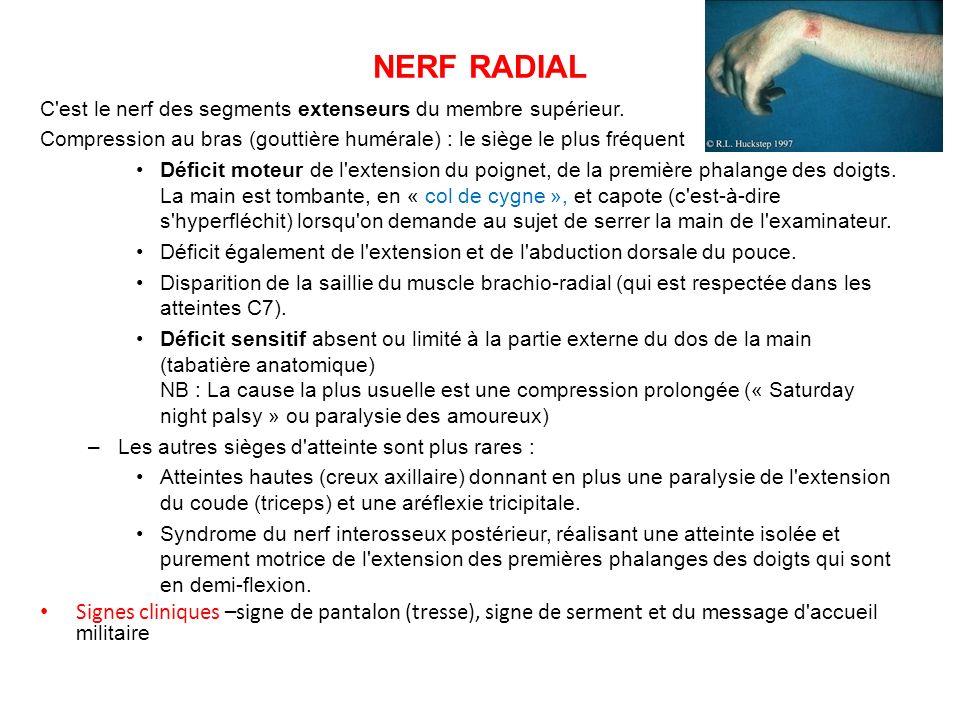 NERF RADIAL C est le nerf des segments extenseurs du membre supérieur.