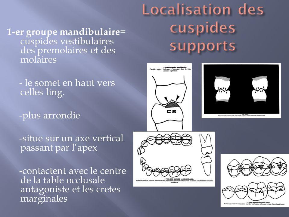 1-er groupe mandibulaire = cuspides vestibulaires des premolaires et des molaires - le somet en haut vers celles ling.