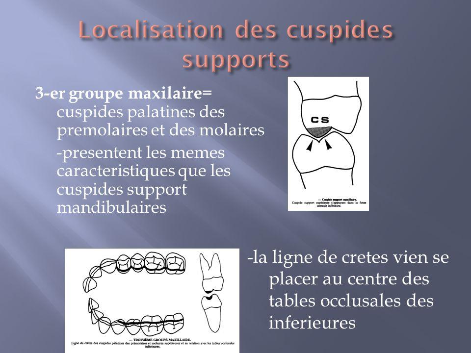 3-er groupe maxilaire = cuspides palatines des premolaires et des molaires -presentent les memes caracteristiques que les cuspides support mandibulaires -la ligne de cretes vien se placer au centre des tables occlusales des inferieures