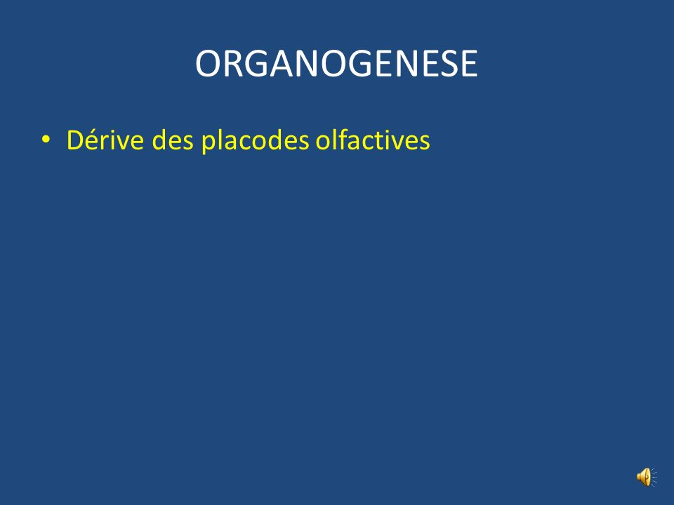 Olfaction et nerf I A-P UZEL P CAIX M MONTAUDON M LAURENTJOYE Les N olfactifs = pas véritable N crânien = évagination du télencéphale N sensoriel dest