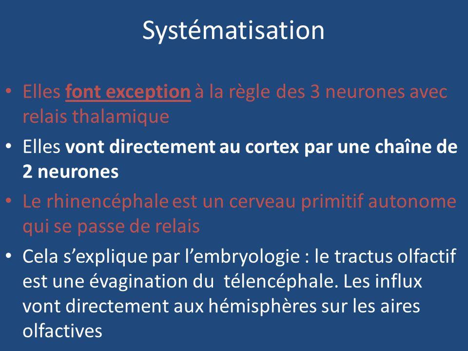 Systématisation Elles font exception à la règle des 3 neurones avec relais thalamique Elles vont directement au cortex par une chaîne de 2 neurones Le rhinencéphale est un cerveau primitif autonome qui se passe de relais Cela sexplique par lembryologie : le tractus olfactif est une évagination du télencéphale.