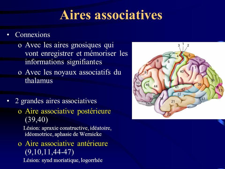 Aires associatives Connexions oAvec les aires gnosiques qui vont enregistrer et mémoriser les informations signifiantes oAvec les noyaux associatifs du thalamus 2 grandes aires associatives oAire associative postérieure (39,40) Lésion: apraxie constructive, idéatoire, idéomotrice, aphasie de Wernicke oAire associative antérieure (9,10,11,44-47) Lésion: synd moriatique, logorrhée
